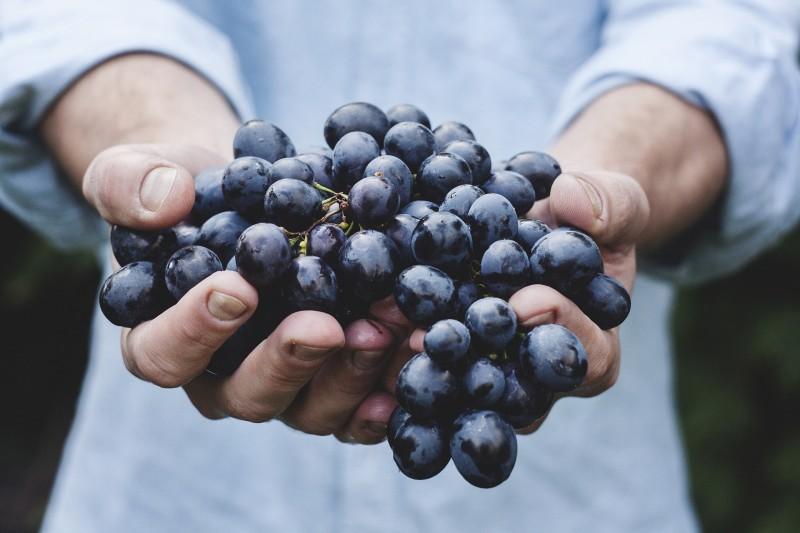 Økologisk firmafrugt - frisk leveret til din virksomhed