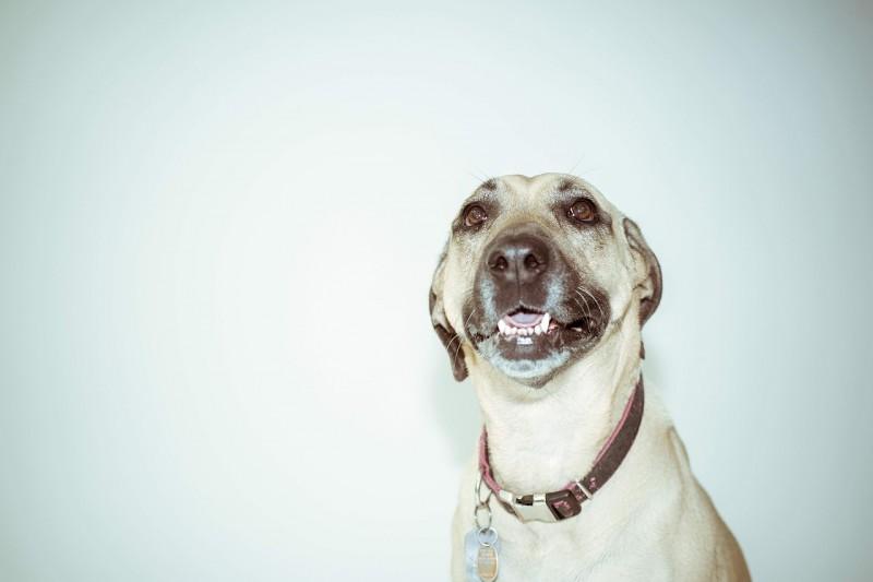 Hundehalsbånd i høj kvalitet